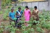 スリランカで自然農法勉強会を開催、普及に弾み